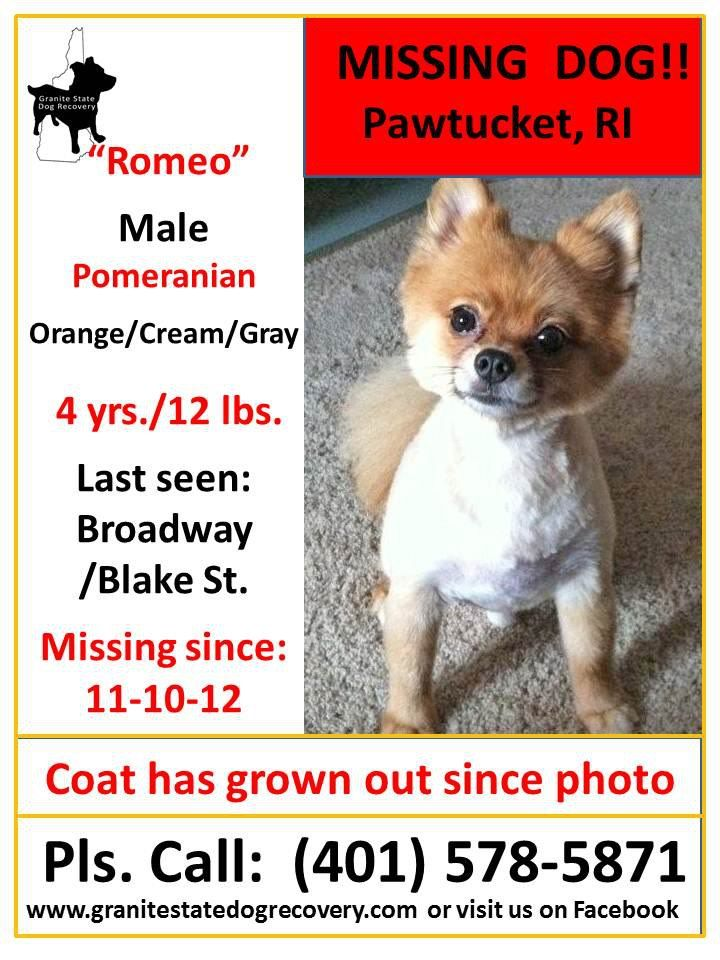 Missing In Ct Ri Ny Granite State Dog Recovery Facebook Losing A Dog Pomeranian Romeo