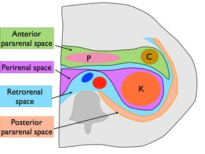 spaces | Anatomy | Anatomy, Greys anatomy, Radiology