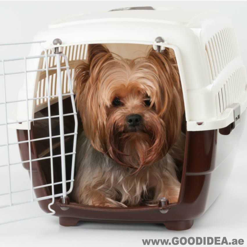 Dog House For Your Pampered Pooch Available On Good Idea Pet Shop Dubai Call For More Information 04 2859696 05087 Pet Shop Pet Accessories Pampered Pooch