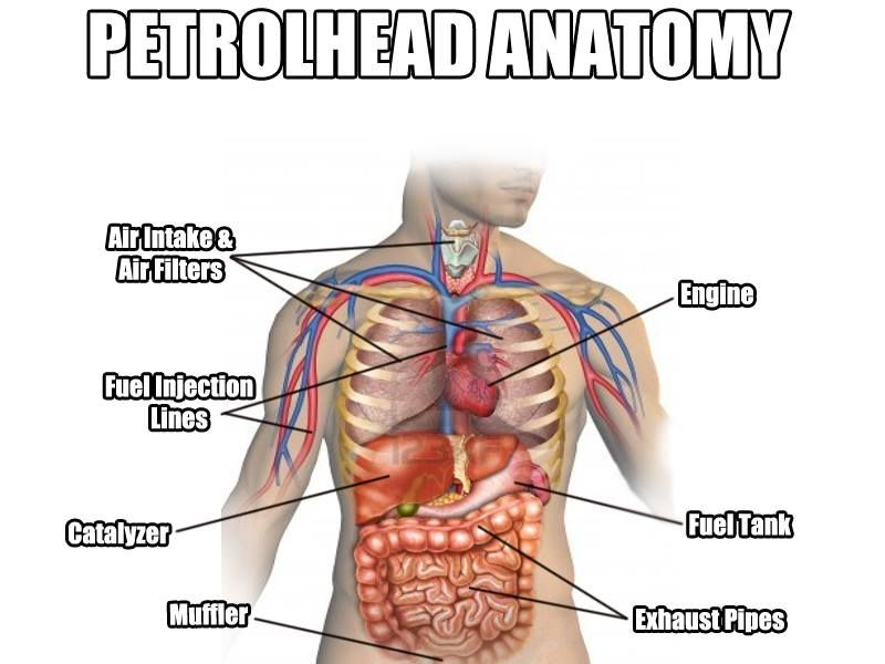 Petrol Head Anatomy | ** Car Torque ** | Pinterest | Head anatomy ...