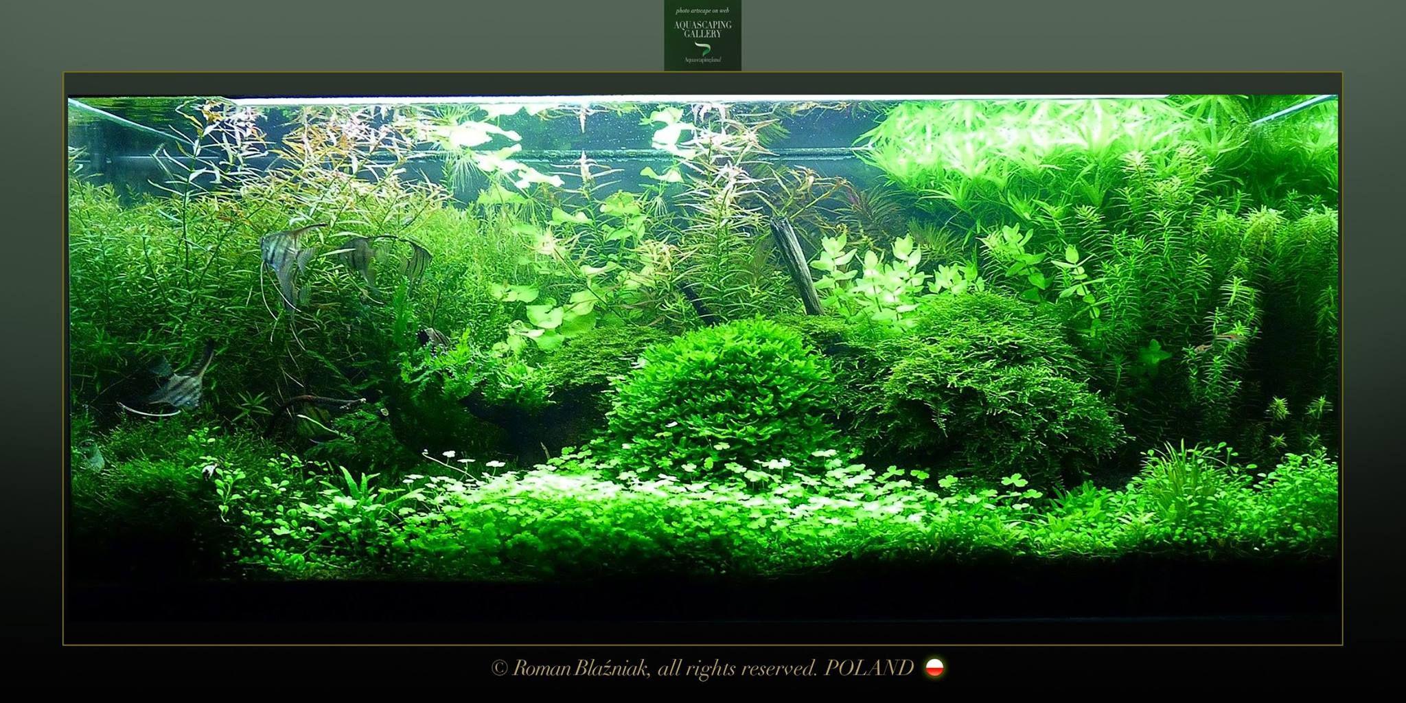 Pin by damien charles on aquariumterrarium pinterest aquariums