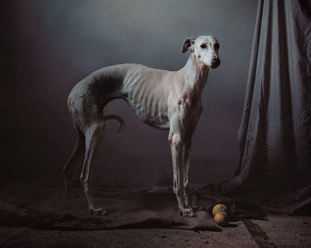 Un fotgrafo britnico convierte en arte a los perros de caza