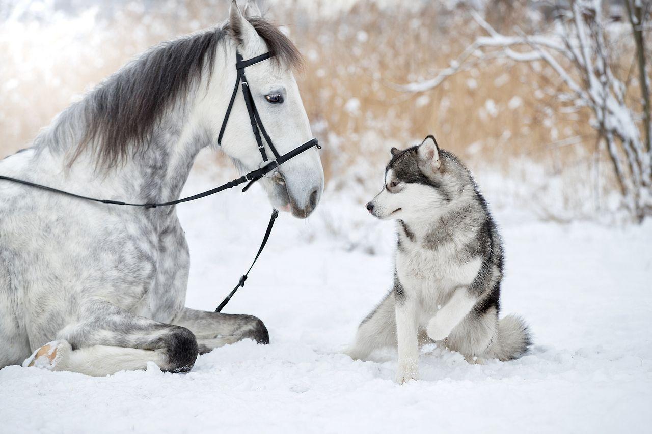 Картинки собак лошадью