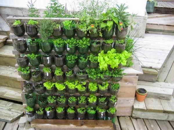 Favoritos horta em casa com garrafa pet - Pesquisa Google   greenhouse  EA98