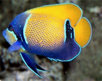 Sale Now On For Fish Supplies In 2020 Sea Fish Marine Fish Beautiful Sea Creatures