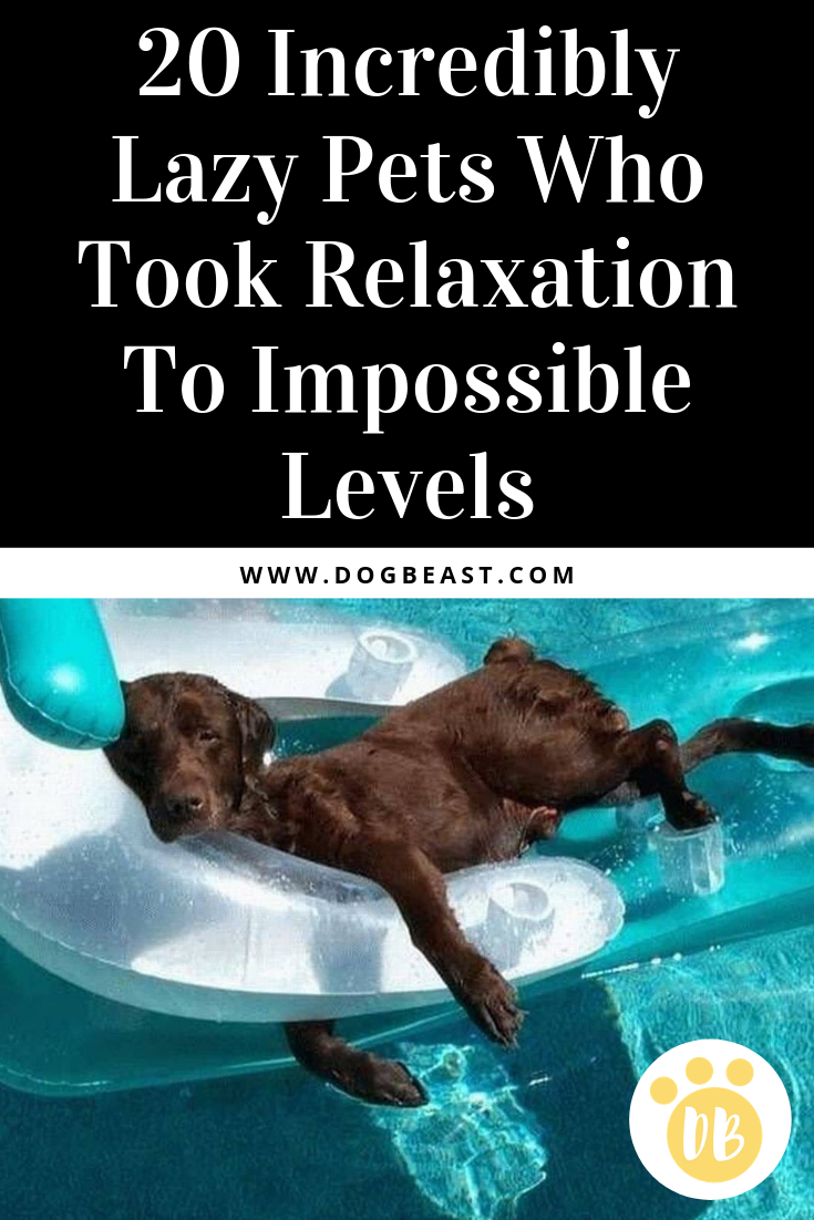 20 Incredibly Lazy Pets Who Took Relaxation To Impossible Levels