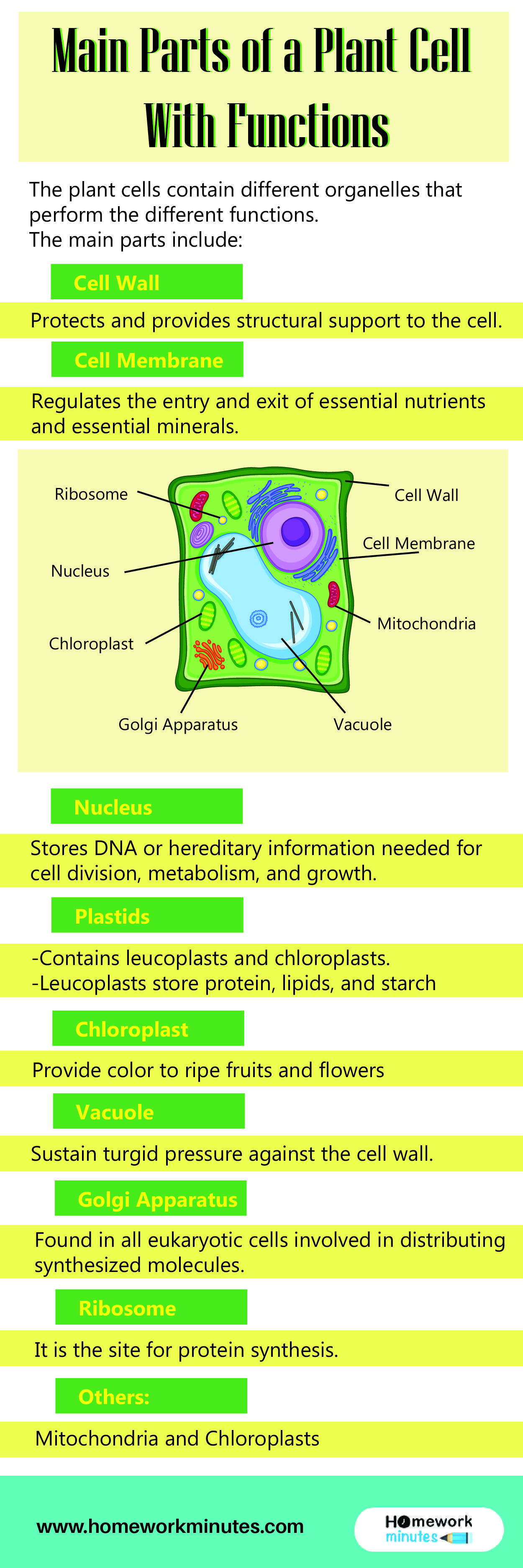Main Parts Of A Plant Cell With Functions Plant Cell Structure Plant Cell Structure Plant Cell Parts Of A Plant [ 3750 x 1250 Pixel ]