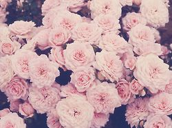 Cute Tumblr Vintage Indie Flowers Pink