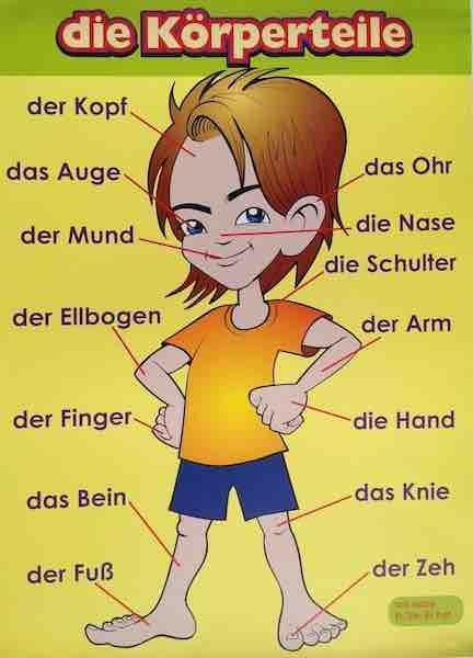 Die Korperteile Learn German German Language Learning German Language