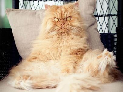 Te presentamos al nuevo Grumpy Cat y está mucho más molesto