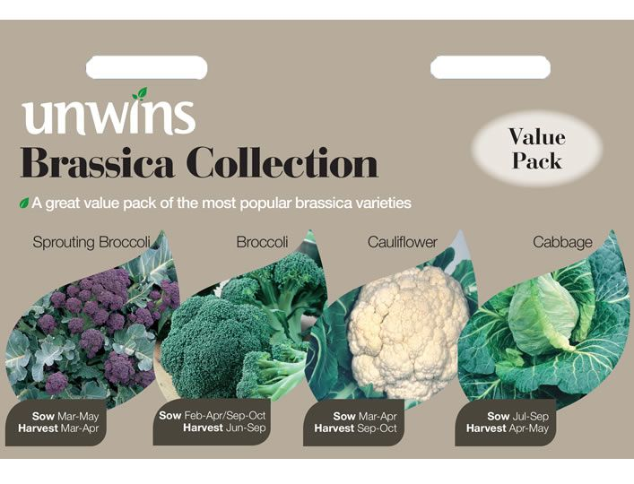 Buy Brassica Seed Collection - 4 in 1 | Unwins