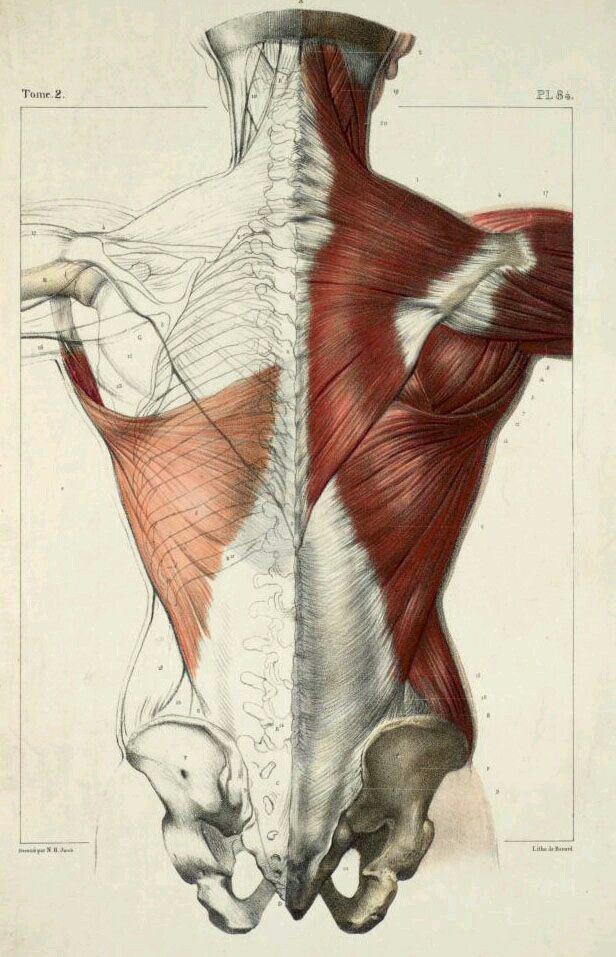 Pin de Walentyne Iurkowski en Схемы, конструкции | Pinterest | Anatomía
