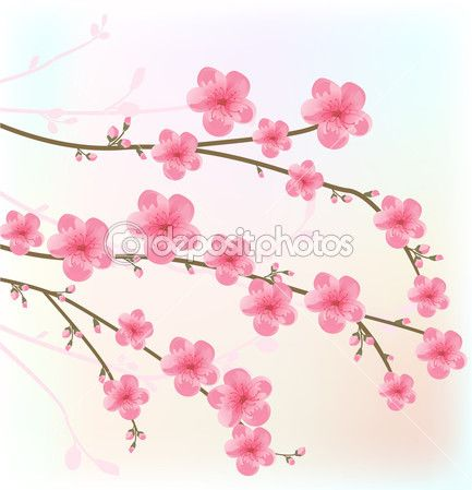 Illustration Of Cherry Blossom Card Vector Art Clipart And Stock Vectors