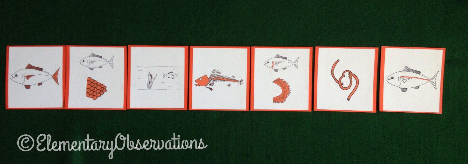 Vital functions of fish | Zoology | Pinterest | Zoology, Montessori ...