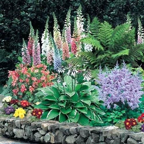 Flowering plants for shade shade perennial flowers ferns garden flowering plants for shade shade perennial flowers ferns garden plants shade plants flowering plants for shady mightylinksfo