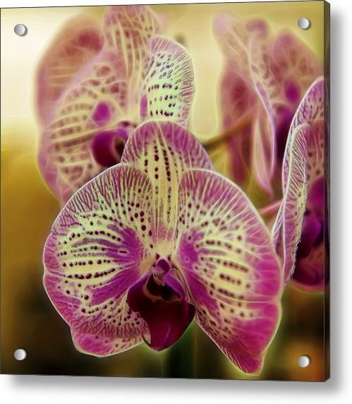 Orchid Dreams Acrylic Print By Bill Tiepelman
