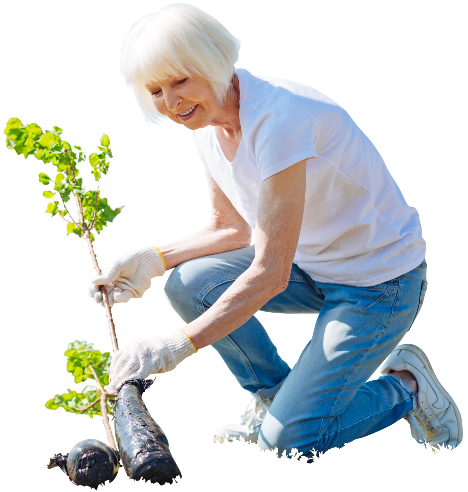 Cutout Elder woman planting tree,garden activity. Free ...