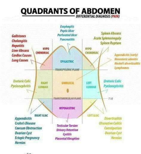 Quadrants of the abdomen anatomy physiology study notes pinterest quadrants of the abdomen ccuart