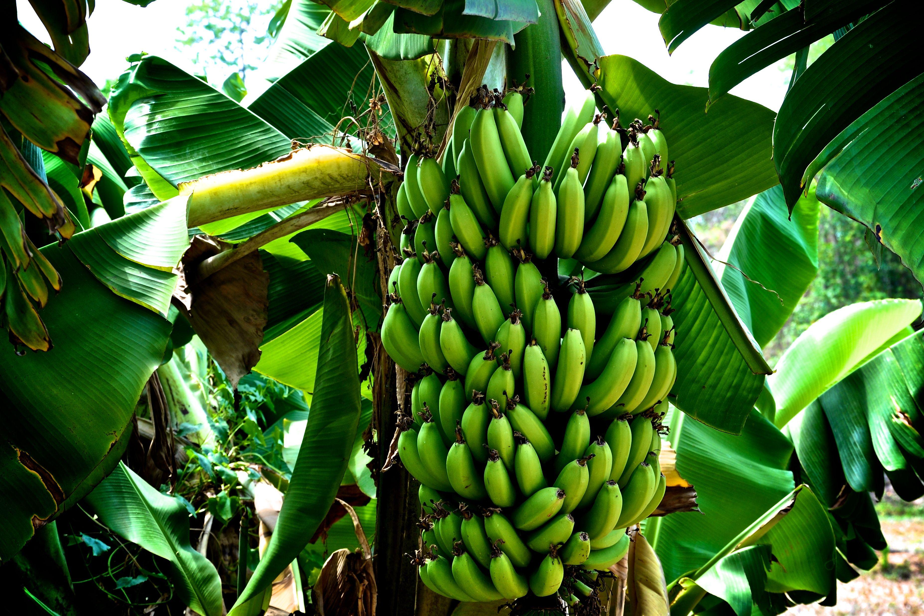 Eat your banana peel! #banana | Vegan Recipes | Pinterest