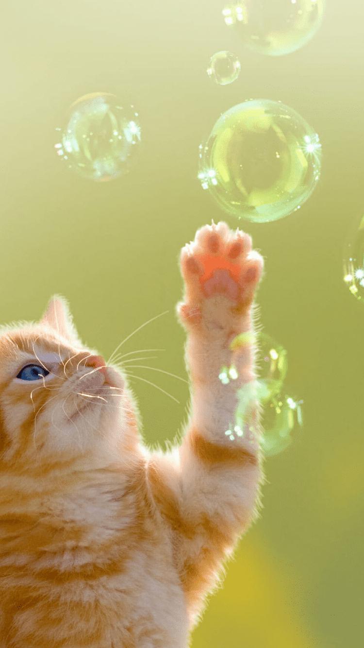 Android Funny Cat Wallpaper Hd Dengan Gambar
