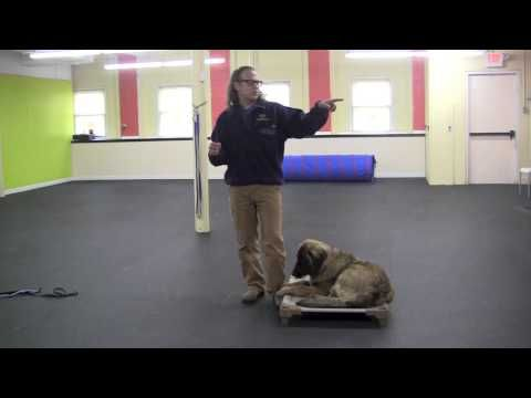 Remote Collar Training Place Command Youtube Jeff Gellman