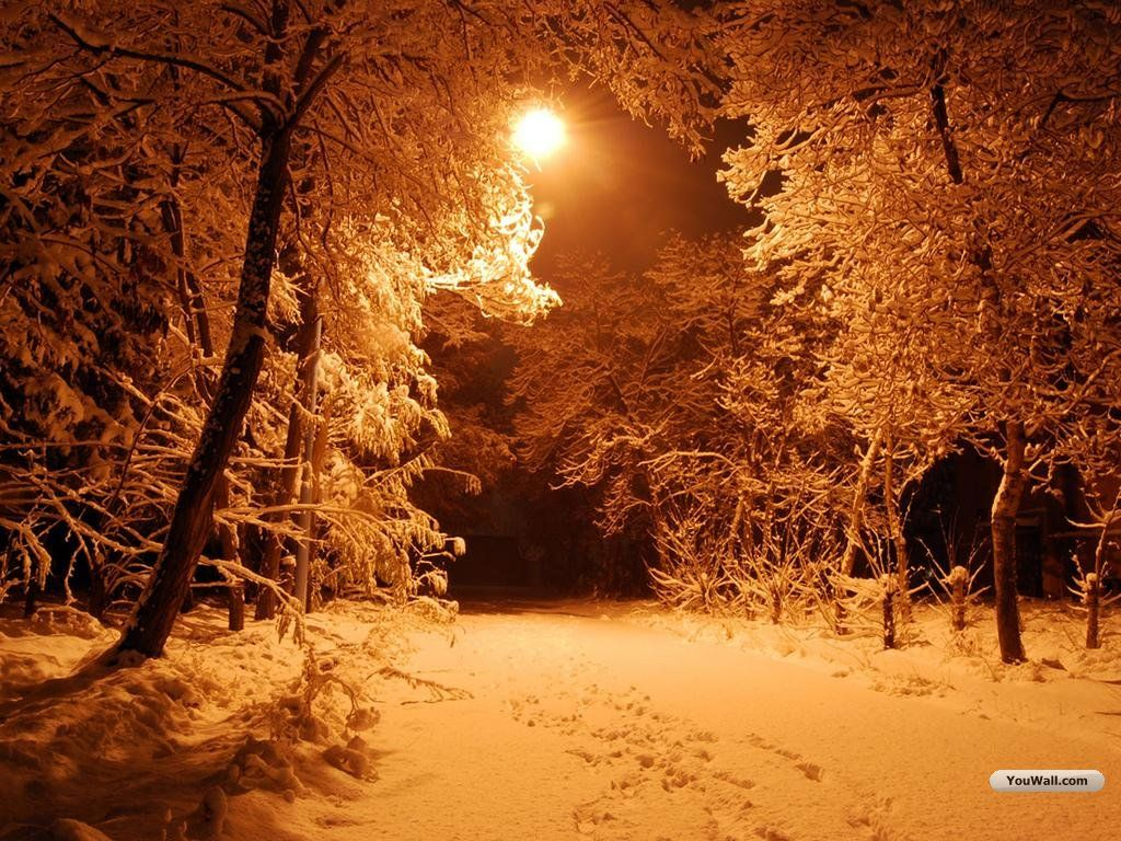 Image Detail For Free Snowy Night Forest Wallpaper Download The
