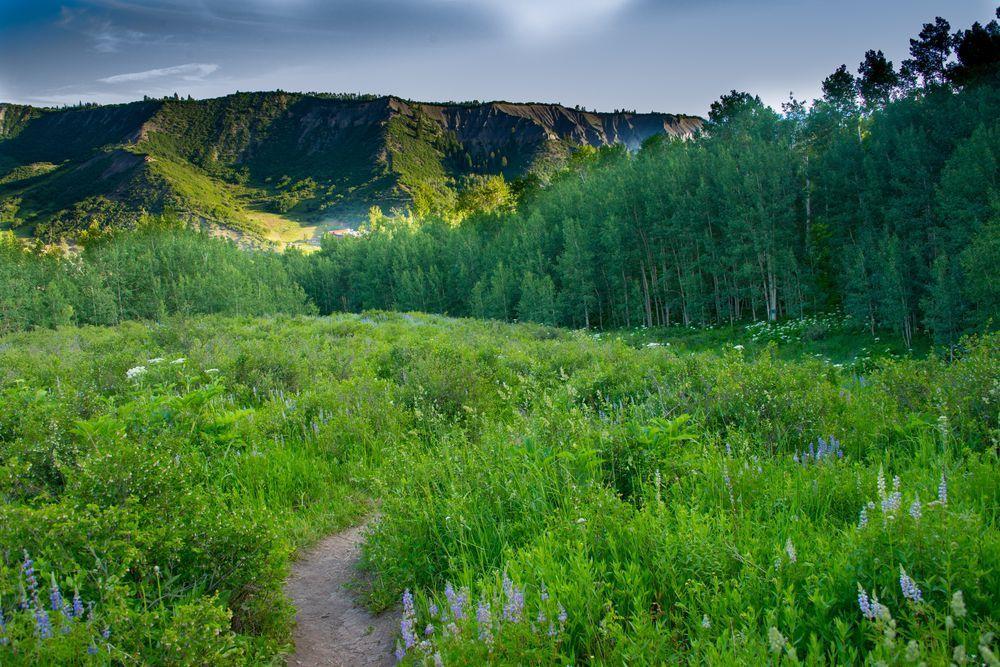 Colorado Prado no nascer do sol Foto por Karen Swift - National Geographic    Em julho as flores silvestres estão florescendo em todos os lugares que você olhar em Snowmass, Colorado. Vá para fora para uma caminhada de manhã cedo e encontrar um prado, com algumas árvores de álamo e um cume em segundo plano e você vai saber a alegria deste lugar.