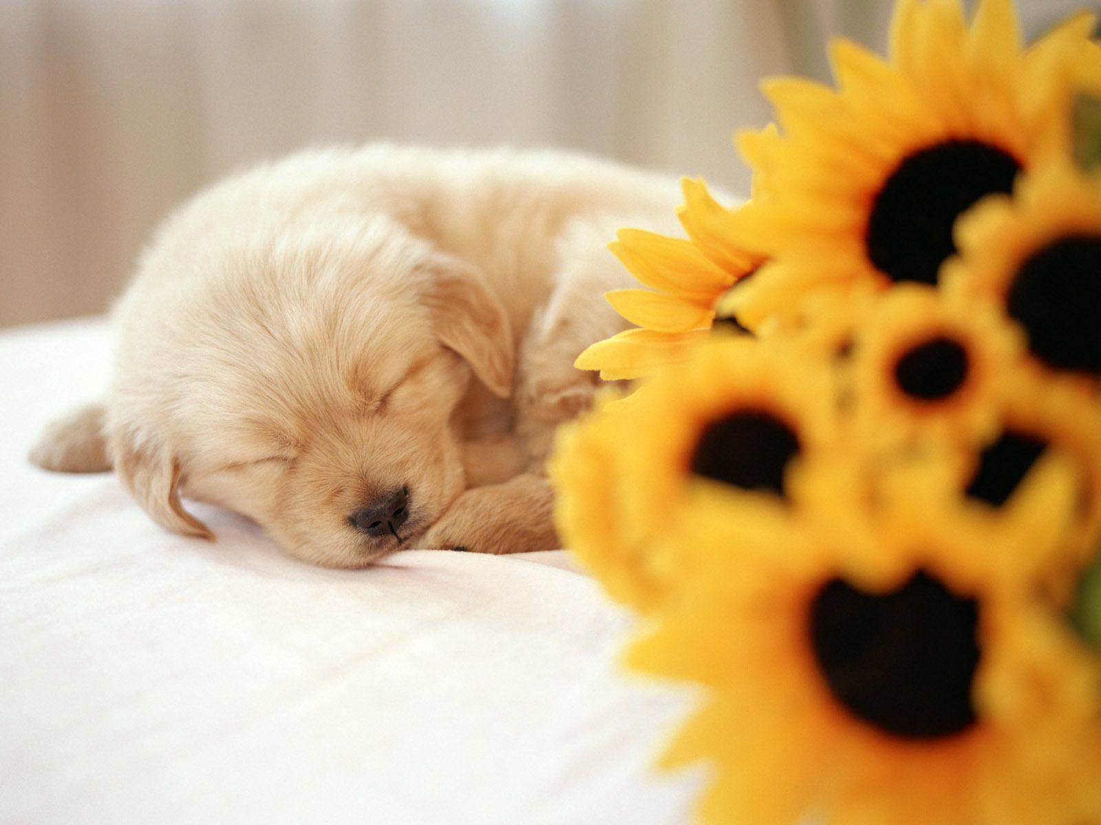 Puppies Wallpaper So Cute Puppy Wallpaper Cute Puppies Puppy Backgrounds