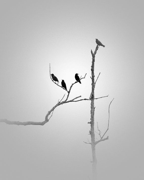 In The Mist B W Simplephotos Photography Simple Minimalist Nature Birds White Photography Black And White Photography White Art