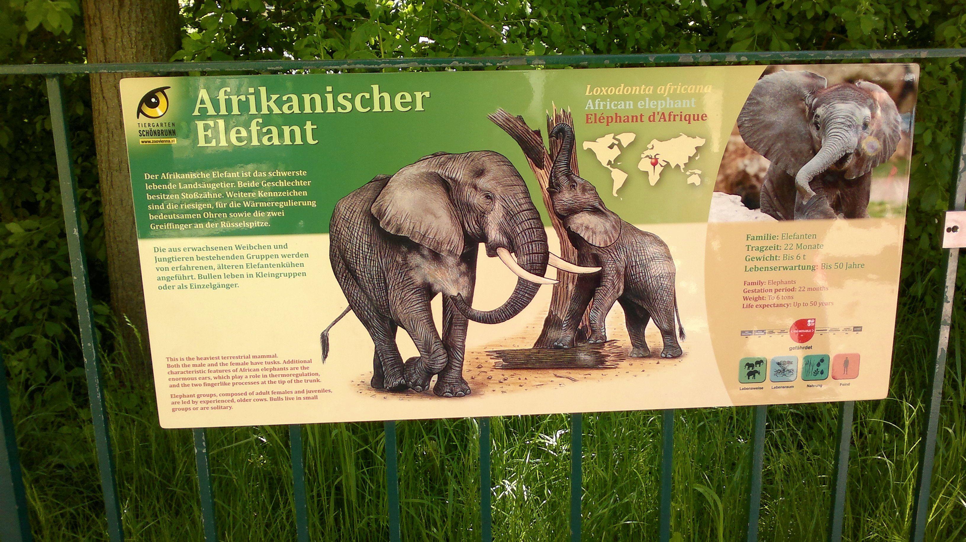 tragzeit elefanten