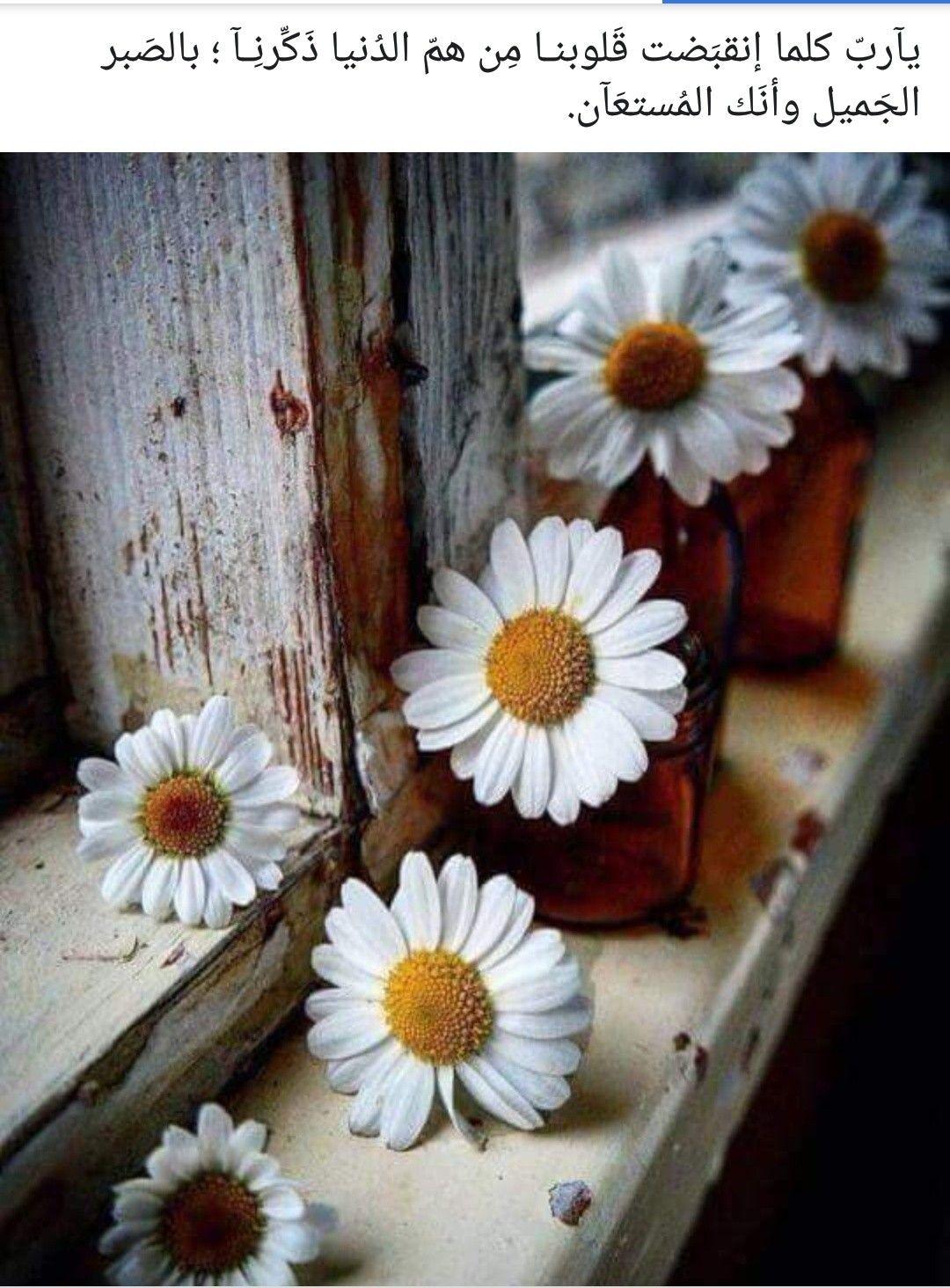 ادعيه image by Zooz Happy flowers, Sunflowers and