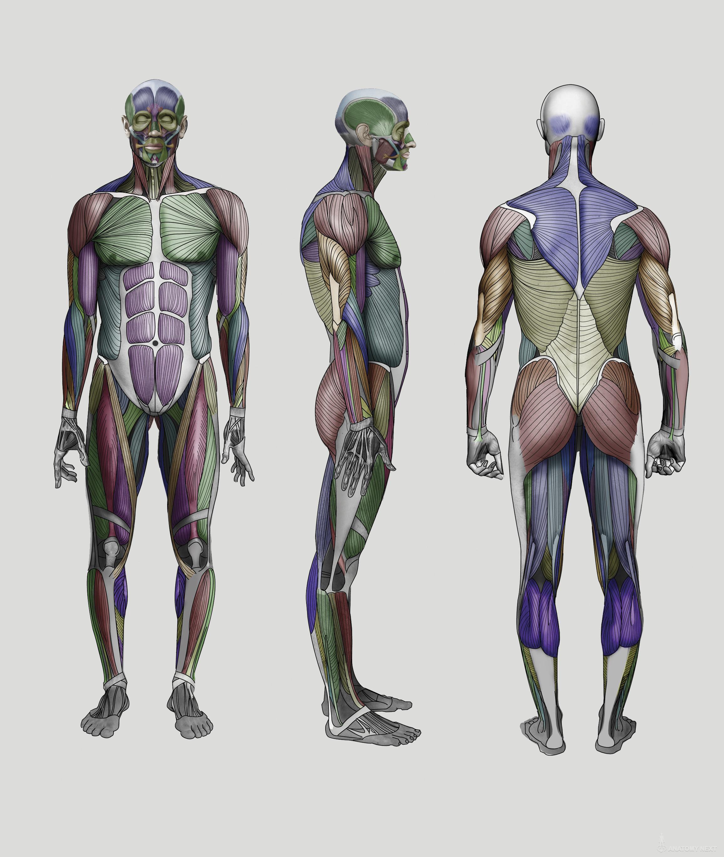 Anatomy Next   Anatomy of Figure Anatomy & features   Anatomy ...