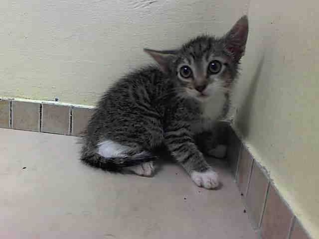 TO BE DESTROYED 7/11/14 ** BABY ALERT! ONLY 8 WEEKS OLD