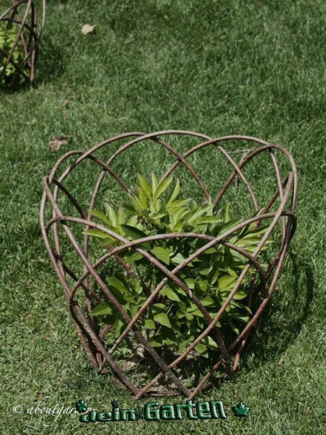 Photo of Chalice Well Gardens: Woven Spiral Wall | Spiral garden, Gothic garden, Garden t…