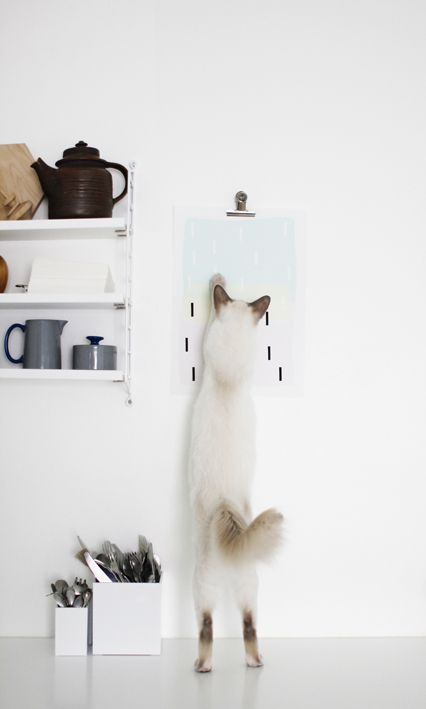 Teapot and cat in white kitchen at Varpunen: Lines - kitchen cat