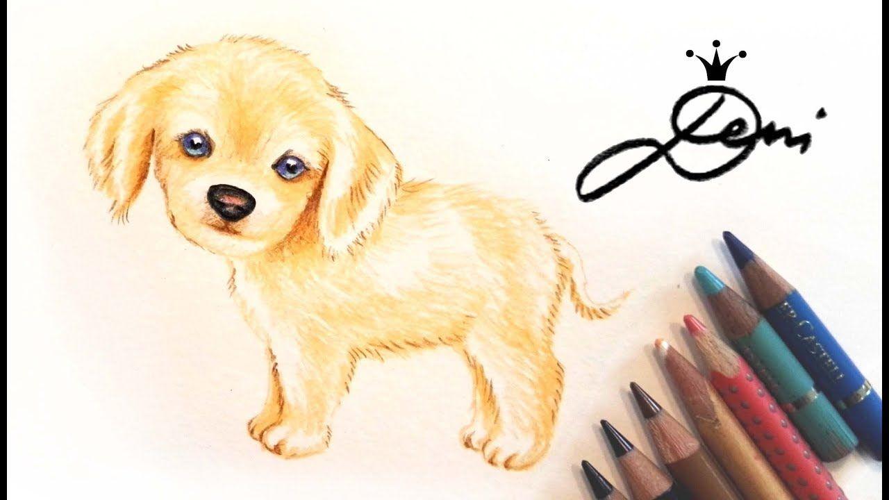 bleistift süße hunde welpen zeichnen