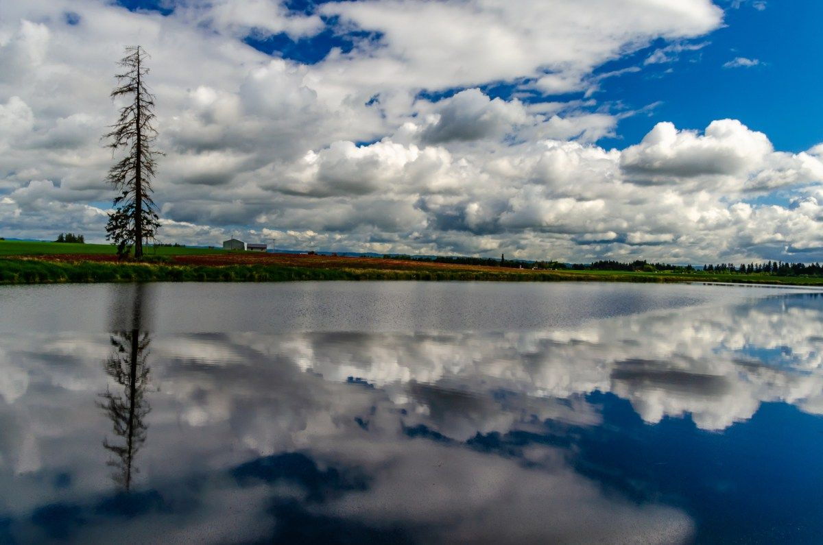 A perfect reflection in the Tualatin valley of Oregon  #oregon #tualatinvlley #reflectionphoto