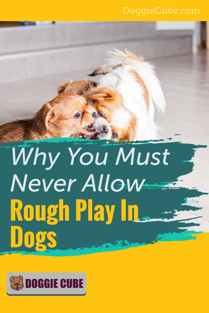 3bb3a160fd961474af8e9f50c0d5d048 - How To Get A Dog To Stop Aggressive Biting