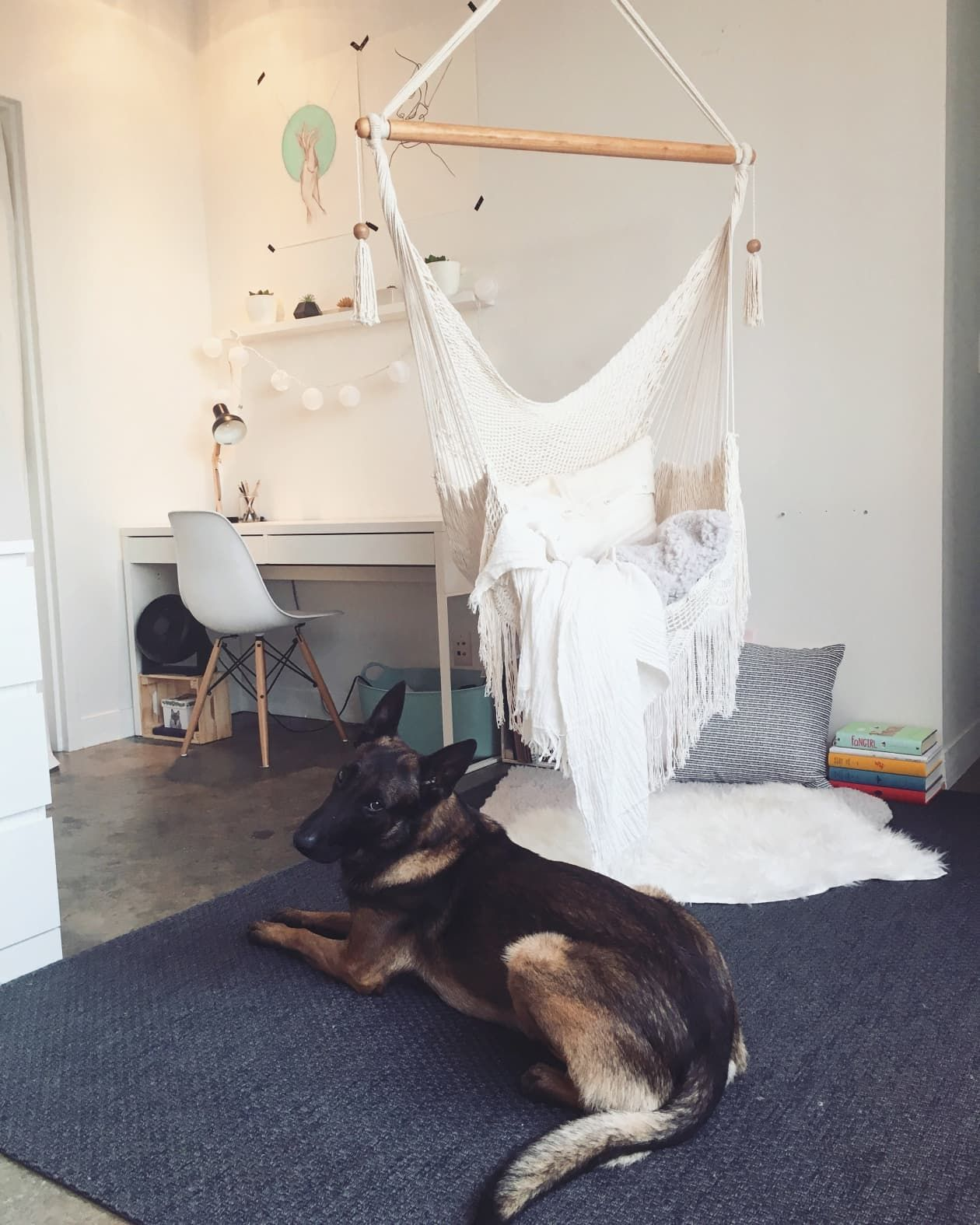 This Dallas Studio Has a Smart IKEA Hack Dog Lovers Will ...