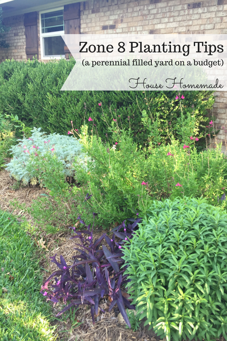 Gardening Tips For Planting With Perennials Zone 8 In 2020 Shade Perennials Shade Landscaping Plants
