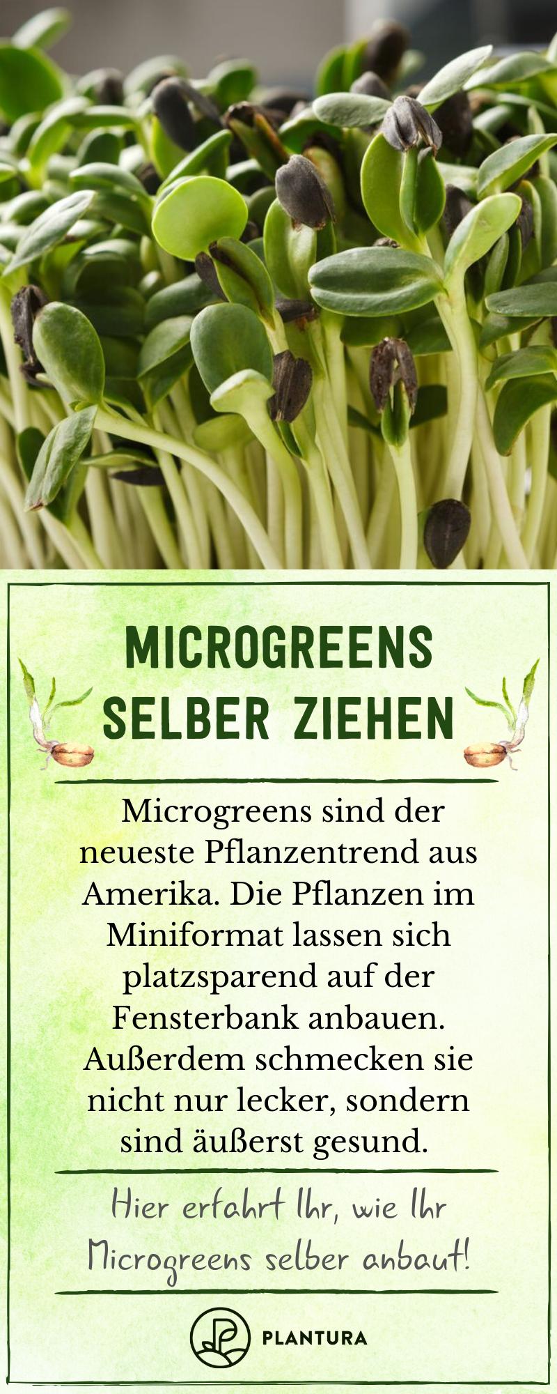 Pflanzen im Miniformat?