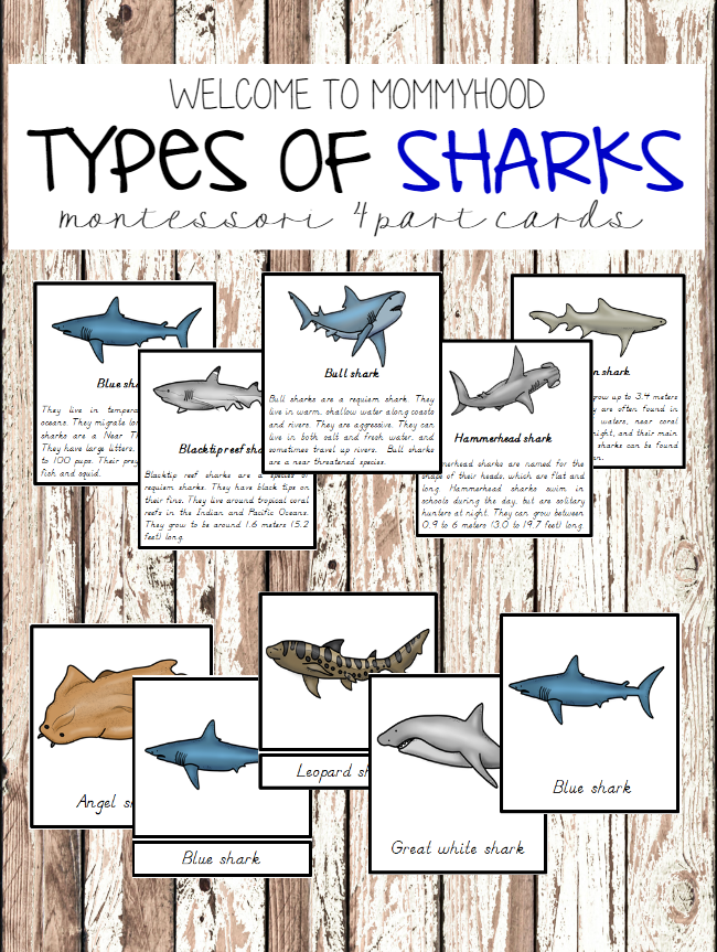 Montessori Types Of Sharks 3 Part Cards With Information Cards By Welcome To Mommyhood Montessori Montes Types Of Sharks Shark Printables Shark Activities