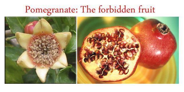 Pomegranate Symbolism Esotericspiritual Symbolism Art Fractals