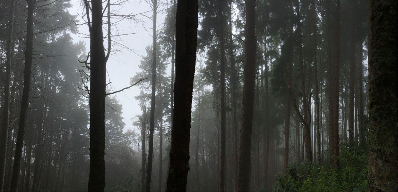 Bosque Humedo Tropical Manizales Colombia Tree Trunk Tree Plants