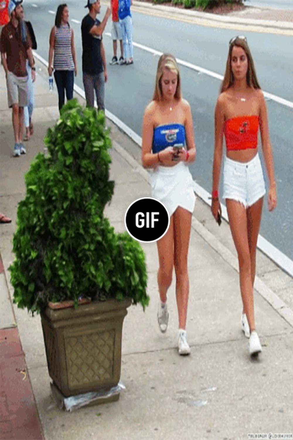 Prank with a live bush in 2020 Funny gif, Best funny