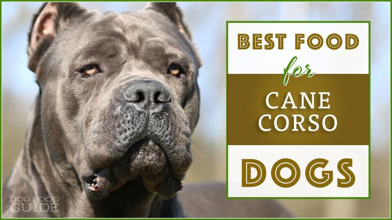 Let S Find The Best Food For Cane Corso Dogs Large Muscular And Born With A Strong Desire To Work Cane Corsos Cane Corso Cane Corso Dog Cane Corso Puppies