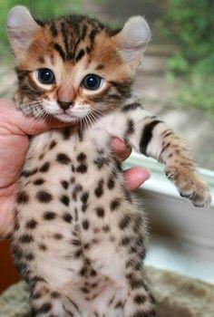 Pin Von Fabienne Wager Auf Katzen Katzen Bilder Susse Tiere Tierbabys
