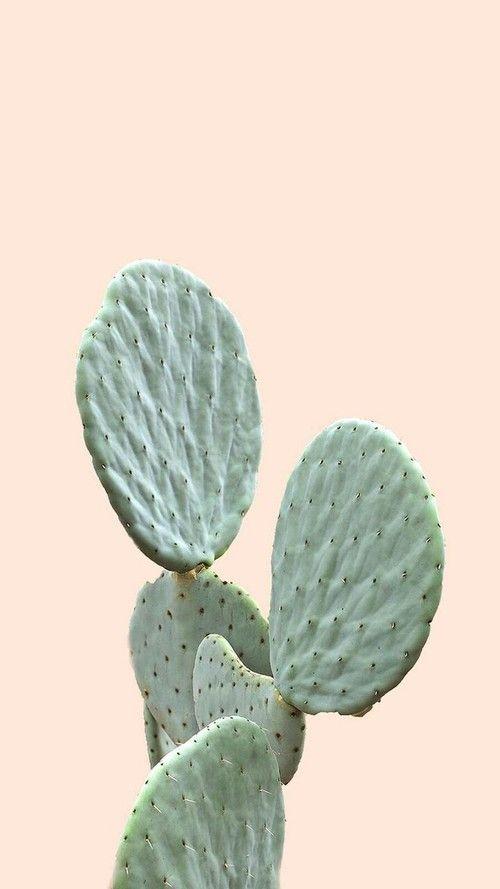 Imagem de cactus, plants, and wallpaper