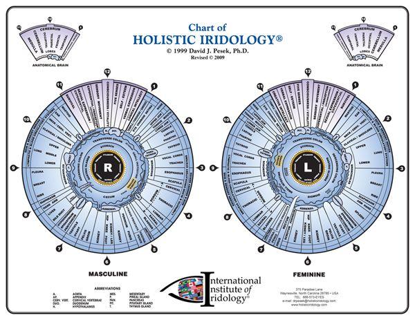 Holistic Iridology Chart Left And Right Eye Iridology