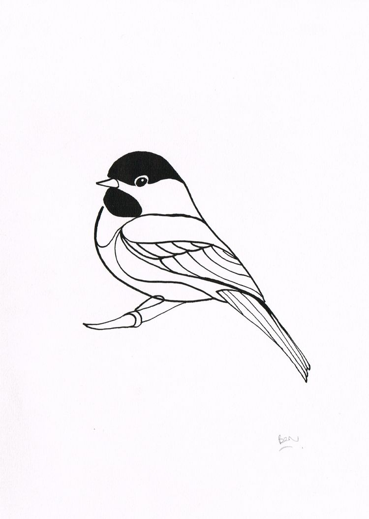 bentheillustrator: Black Capped Chickadee - Dip pen and ink drawing ...